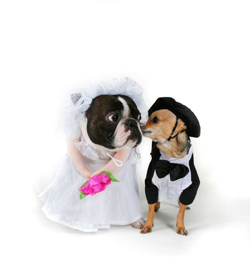 Shutterstock wedding humour