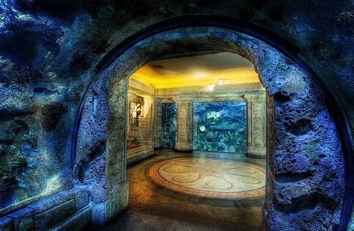 Awesome las vegas wedding locations wpic the shark reef aquarium at mandalay bay junglespirit Images